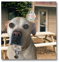 Dog Friendly outdoor seating